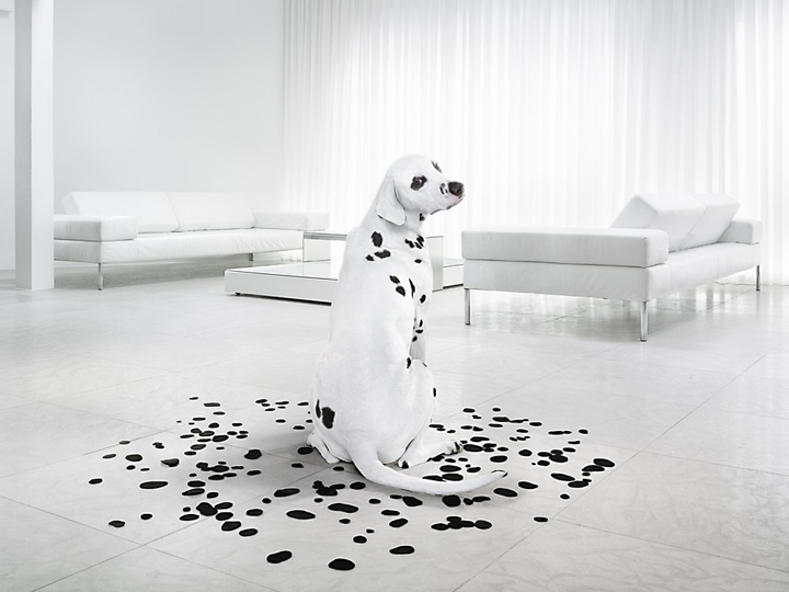 Green News Greenhousereps Dalmation Carpet Cleaning Bend